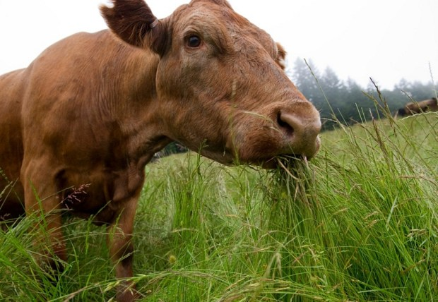 Image result for grass fed beef