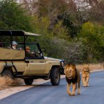 Camping and safaris in southafrica