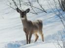 Deer-Jackson Hill