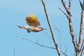 Flicker-in-flight