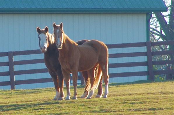 Horses - Clinton