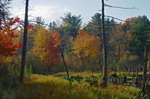 Swamp-Scene RayHill