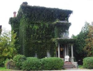 Ivy House Utica