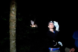 Bat release after collecting data with Orly Razgour photo by Arturo Munoz