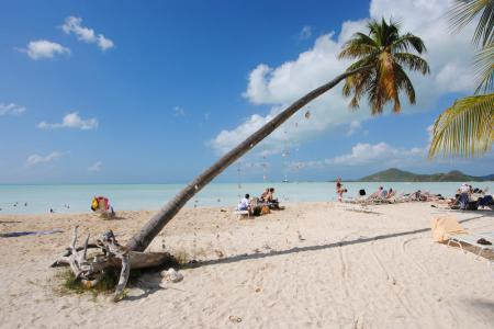 Chilled-Out-Palm-Tree-Jolly-Harbour-Antigua