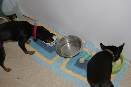 Doggies like birthdays, too!