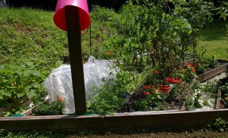 Garden - before weeding