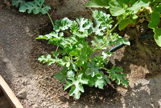 Gardening8