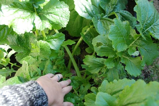 wintergarden13