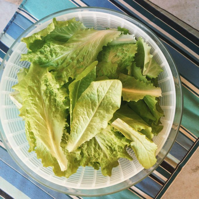 Garden Butter Lettuce