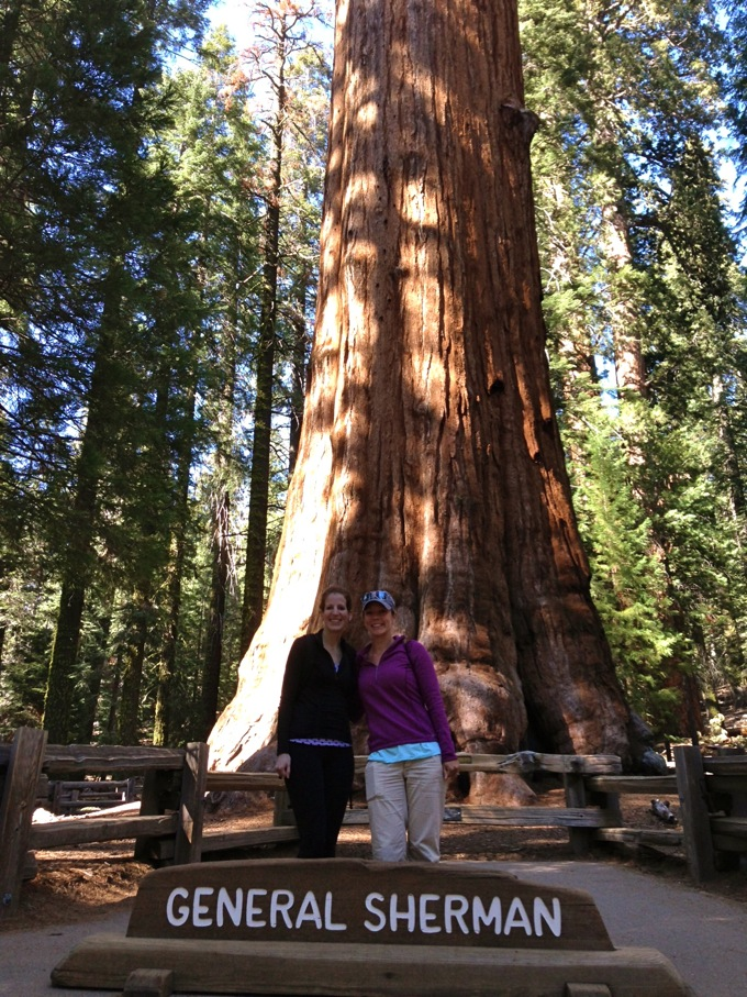General Sherman tree at Sequoia National Park