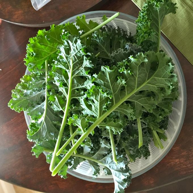 Garden Kale
