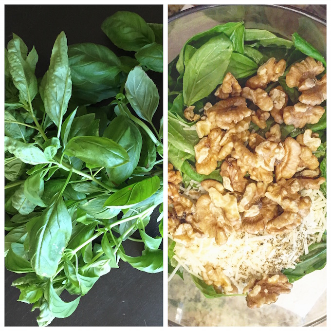 Garden basil turned pesto