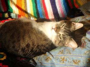 Les chats sont un sujet de conversation que j'utilise souvent avec clients!