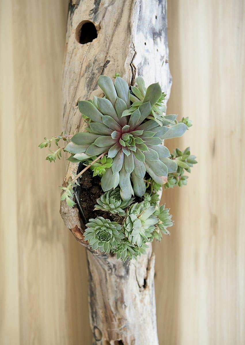 diy driftwood succulent centerpiece  u00bb jessica brigham