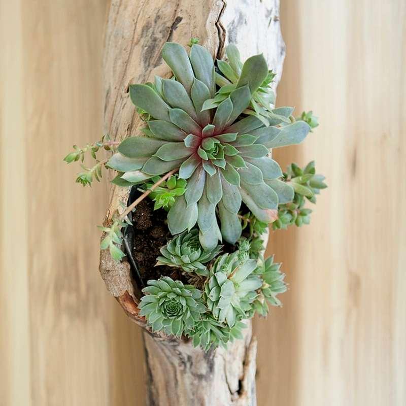 DIY Driftwood Succulent Centerpiece