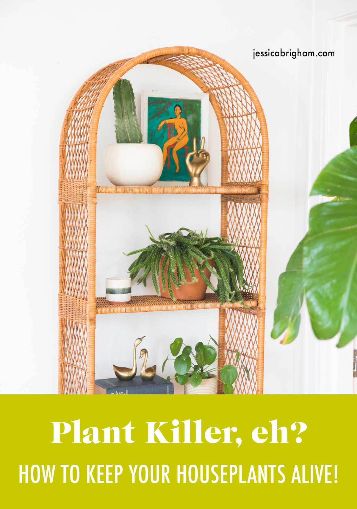 How to Keep Your Houseplants Alive | Best Indoor House Plants | Gardening Tips | Jessica Brigham | Magazine Ready for Life