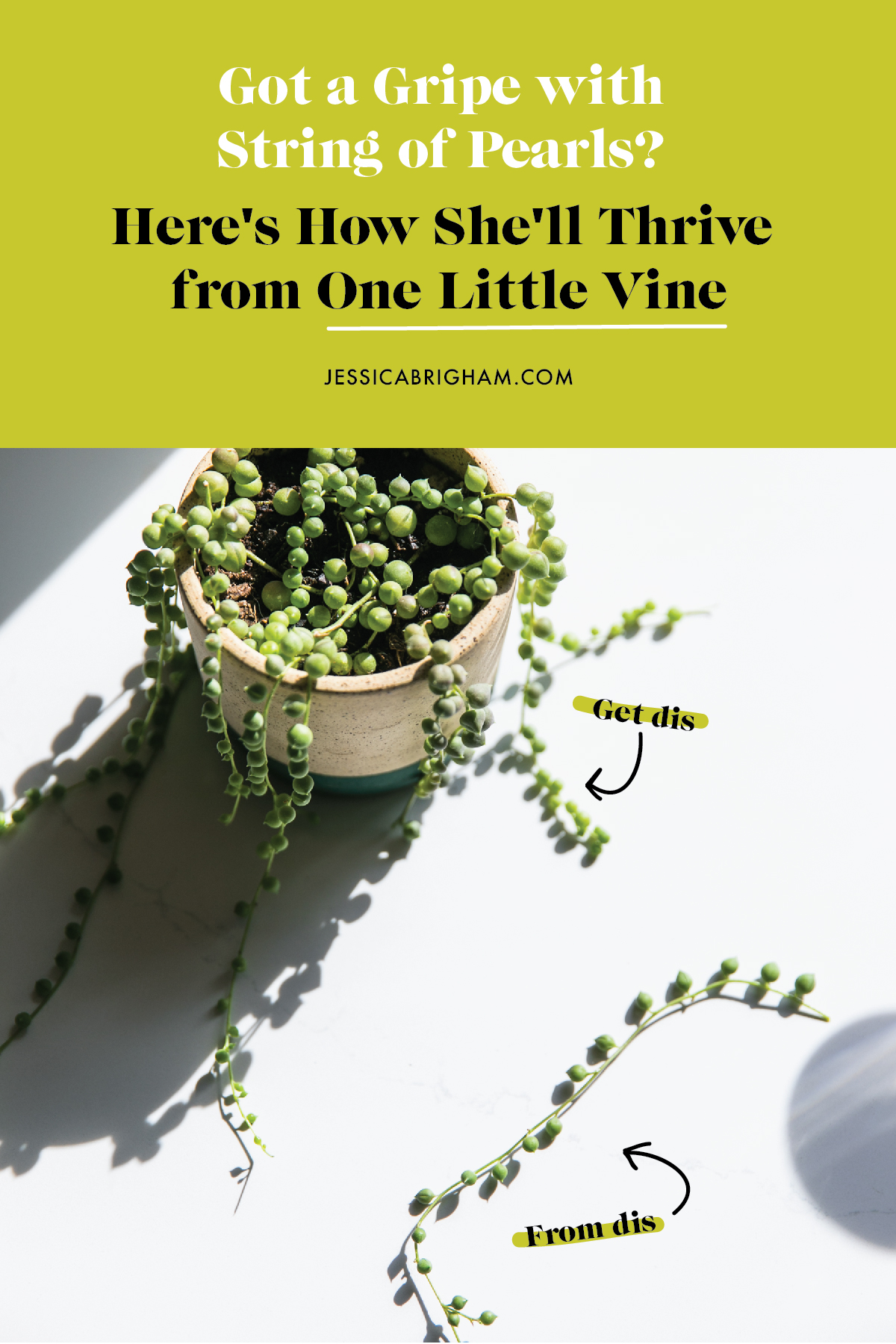 Got a Gripe with String of Pearls? Here's How She'll Thrive from One Little Vine | #PLANTPARDAY | House Plant Care | JessicaBrigham.com