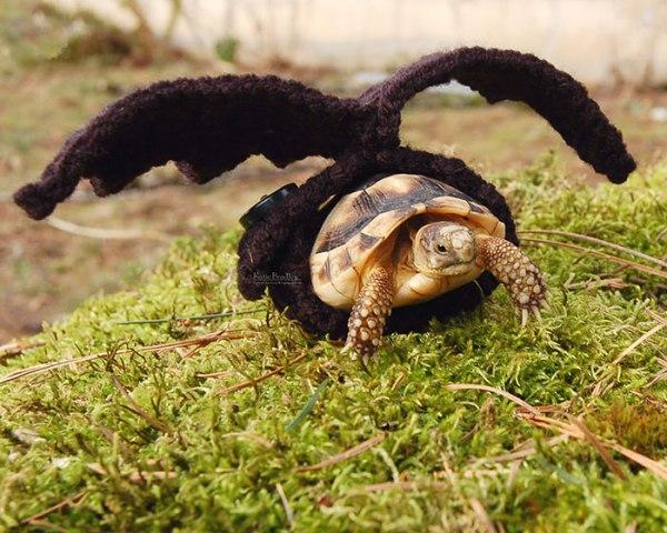 cute-crochet-tortoise-cozy-katie-bradley-171