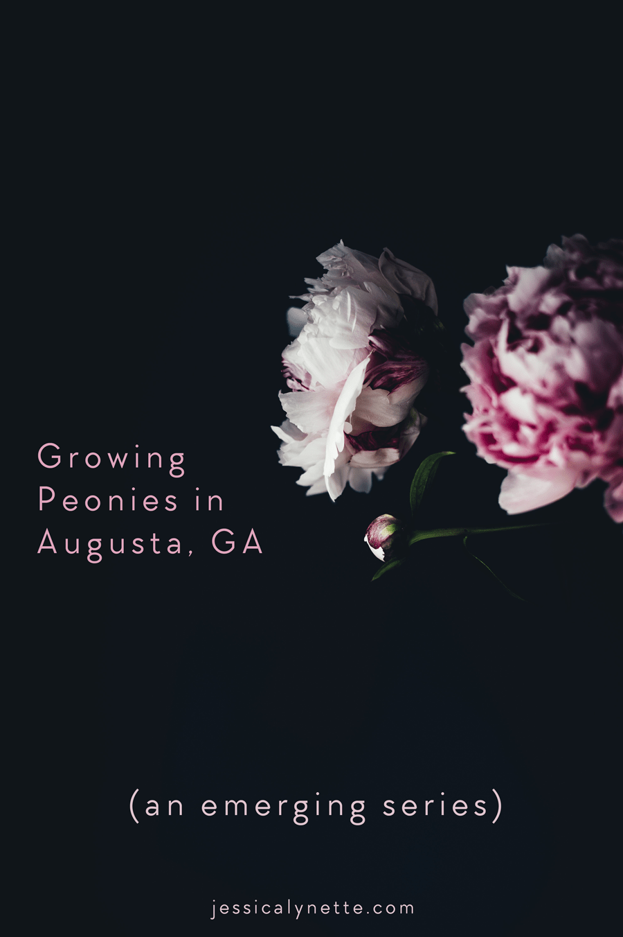 Growing Peonies in the South