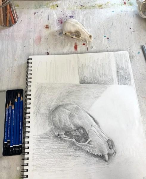 Possum Skull pencil drawing