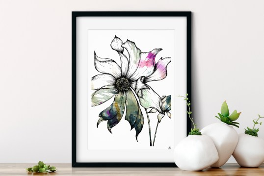 Clematis Floral Illustration