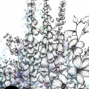 Fox Glove Illustration