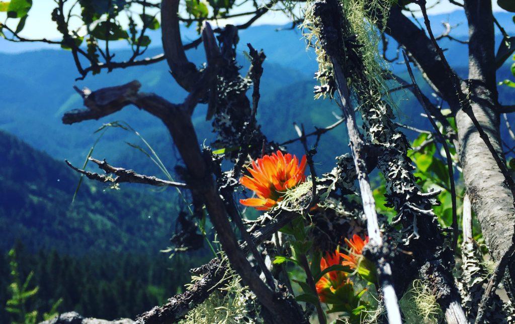 indian paintbrush on Dead Mountain