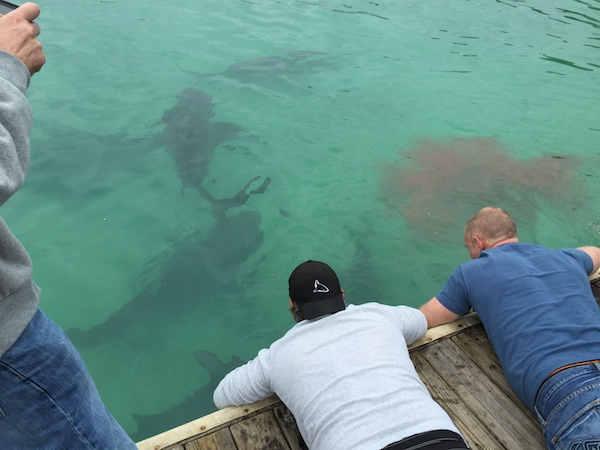 Eli and Chris with their cameras in the water hoping for a dockside bull shark shot!