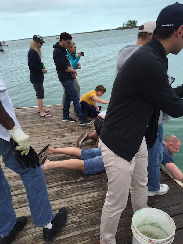 No diving, so we're photographing bulls from the dock