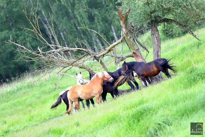 Ćwierćmaraton bielika dulny foto konie