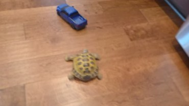 Czy każdy żółw jest powolny ? Niekoniecznie!