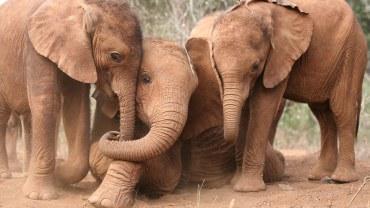 Fotografie z sierocińca dla słoni. Naprawdę rozczulające!