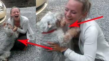 Na początku myślałem, że ten pies potrzebuje weterynarza, potem zrozumiałem, że to radość!