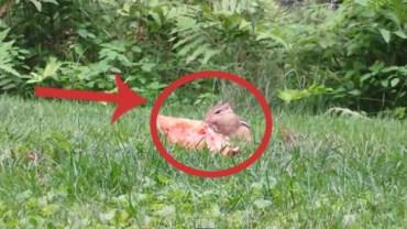 Kiedy zobaczyłem, co je ta wiewiórka, nie mogłem uwierzyć!