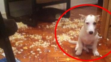 Te psy wyglądają tak, jakby nie miały pojęcia, co się stało. A jednak mają coś na sumieniu!