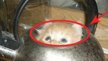 Gdy zobaczyłam, gdzie te koty się schowały, popłakałam się ze śmiechu!