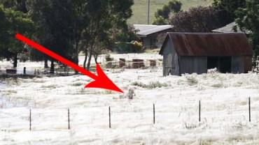 Na tym zdjęciu coś nie gra! To nie opad śniegu. Prawda jest szokująca!