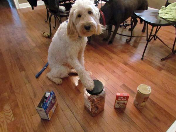 PEANUT DETECTOR DOG