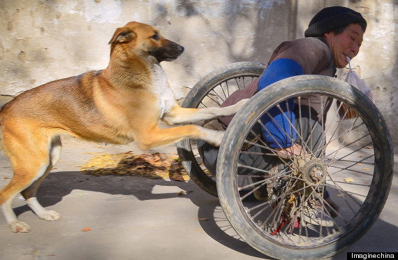 Inspiring pup pushes disabled owner to work in wheelchair