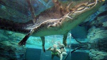Dla zwiększenia adrenaliny pływają z krokodylami! Zobaczcie, jak stają oko w oko z niebezpiecznymi gadami!