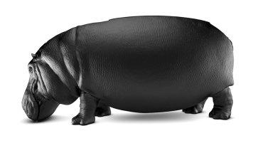 Chciałbyś usiąść na hipopotamie? Teraz masz szansę, przekonaj się sam!