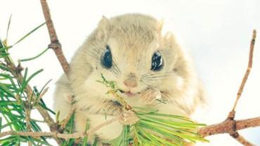 Poznaj 7 najsłodszych zwierząt z japońskiej wyspy Hakkaido. Mój ulubiony to nr 3 ;)