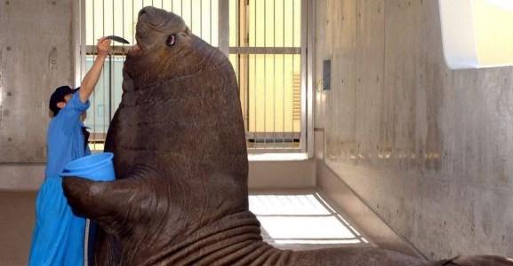 Nie zdawałam sobie sprawy, że te zwierzęta są tak ogromne... dopóki nie zobaczyłam ich w towarzystwie ludzi. Numer 19... OMG!