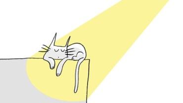 Sny o potędze… Czyli o czym marzą koty!
