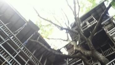 W tym domku na drzewie ukryta jest głębsza historia!