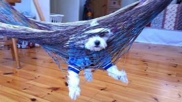 28 psów, które znalazły się w niekomfortowej sytuacji