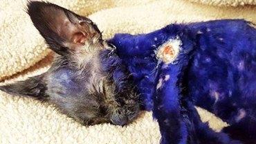 Ten fioletowy kotek był żywym gryzakiem dla agresywnych psów! Ta historia mogła skończyć się tragicznie...