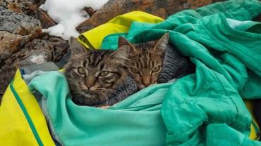 Znalezione koty stały się ich towarzyszami i najlepszymi przyjaciółmi