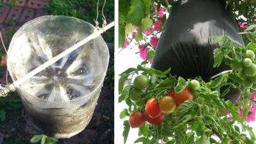 Sprytny sposób na wyhodowanie wiszących pomidorów. To idealne rozwiązanie na balkon!